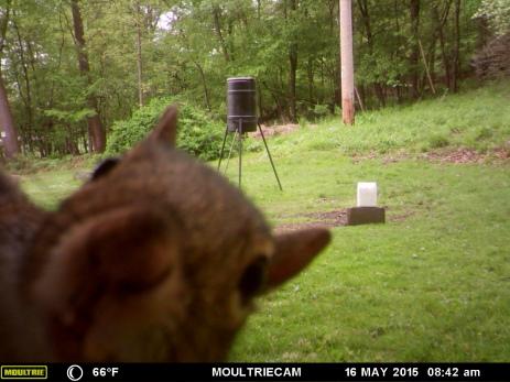 """Hey...the bird feeder's empty! What did you do, oversleep or something?"""