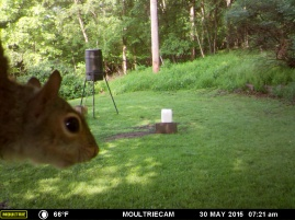 MR SQUIRREL'S SELFIE.