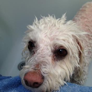 MAX AFTER HIS BATH.