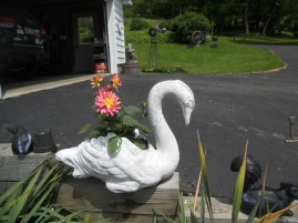 GERBERA DAISY IN SWAN FLOWER POT.