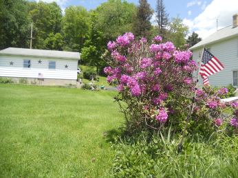 SIDE ANGLE OF THE RHODODENDRON BUSH.