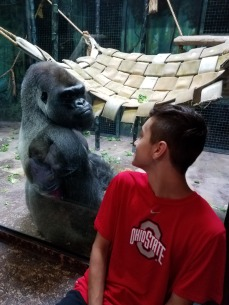 MY NEPHEW LOOKING AT A GORILLA AT KENTUCKY ZOO.