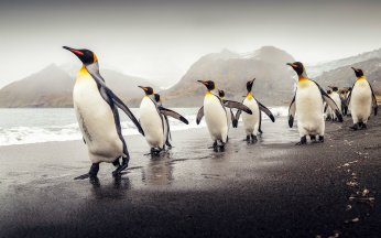 Beautiful-Penguin-HD-Images-Free-Download[1]