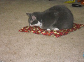 DAISY MAE ENJOYING HER NEW CATNIP MAT SHE WON.