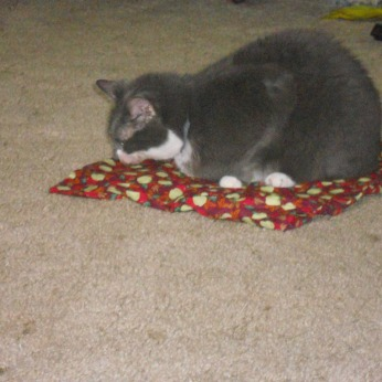 QUEEN DAISY MAE ENJOYING HER NEW CATNIP MAT SHE WON.
