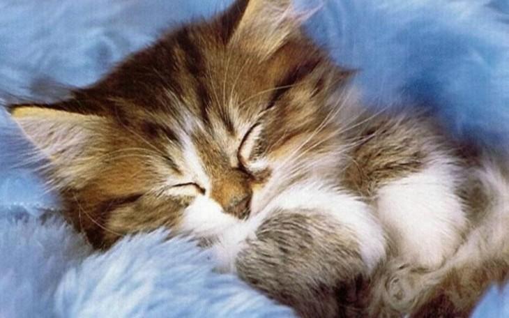 Cute-Kitten-kittens-16122136-1280-800