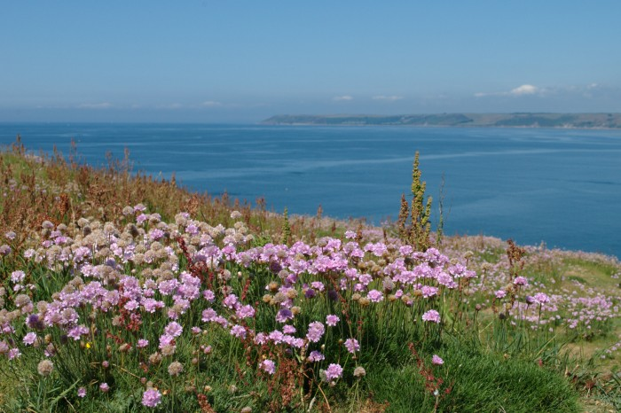 thrift-on-cliff