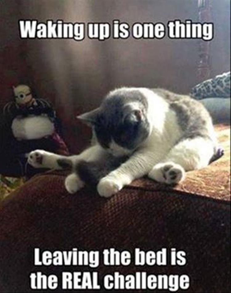 cat-waking-up