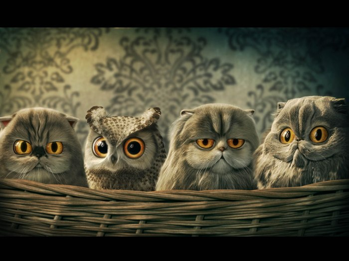 Funny Owl Wallpapers 4