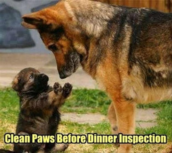 25-Funny-Animal-Pictures-That-Are-Sure-to-Brighten-Your-Day-05