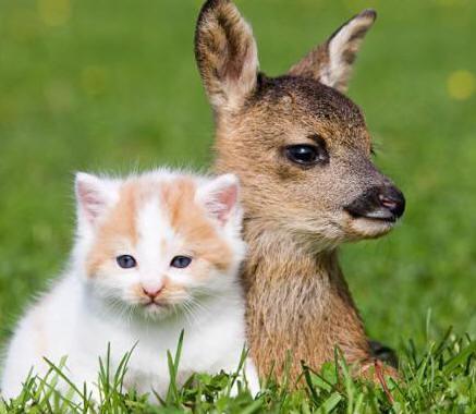 fawn-kitten