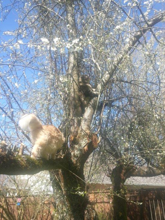 Marigold in tree