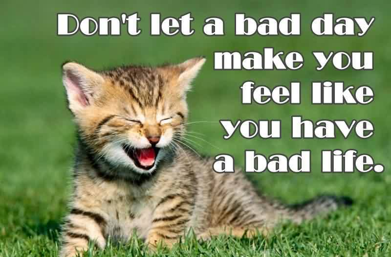 best-motivational-quote-cat-picture-about-life