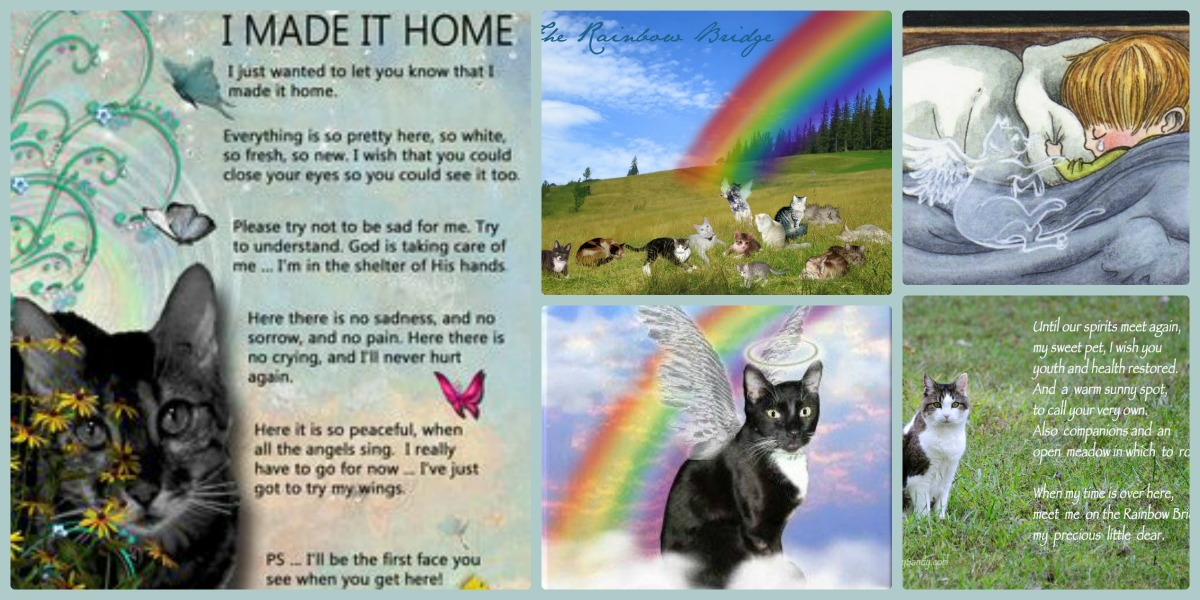 cat-collage-rainbow-bridge