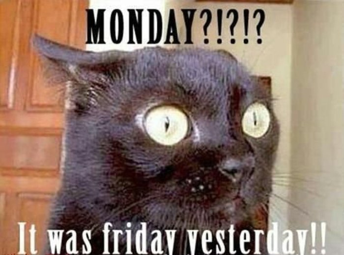 Amazing Monday Cat Meme Hilarious & Funny Monday Memes To Lighten Your Day