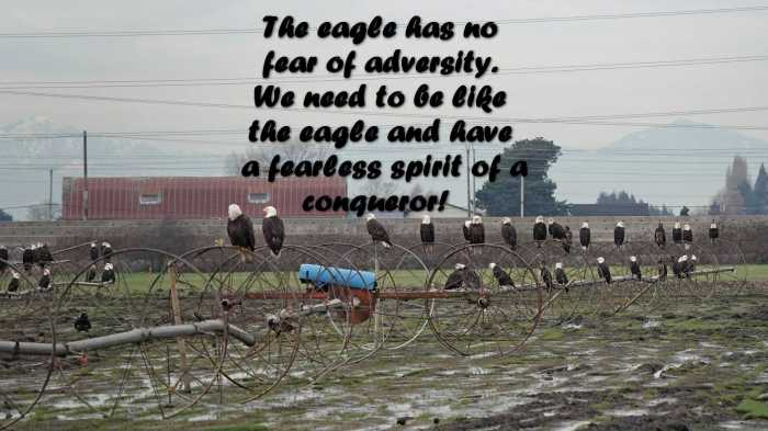 the-eagle-has-no-fear-of-adversity.-we-need-to-be-like-the-eagle-and-have-a-fearless-spirit-of-a-conqueror