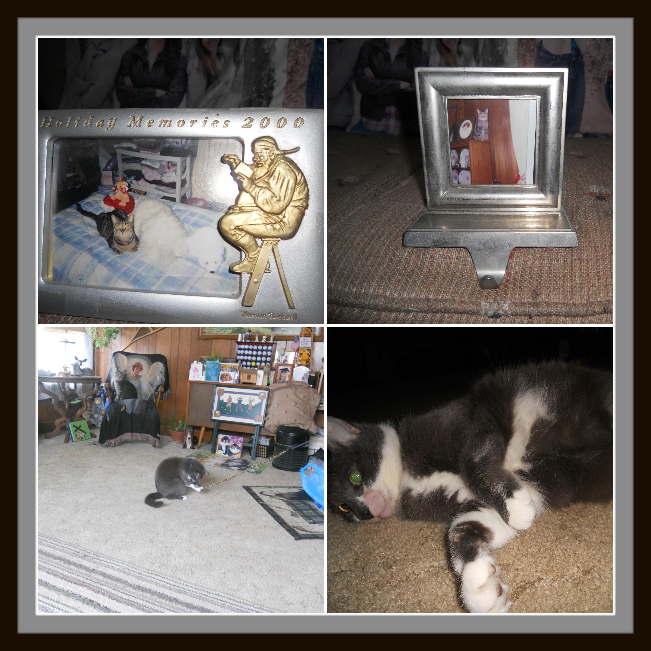Collage - Tigger & Daisy Mae