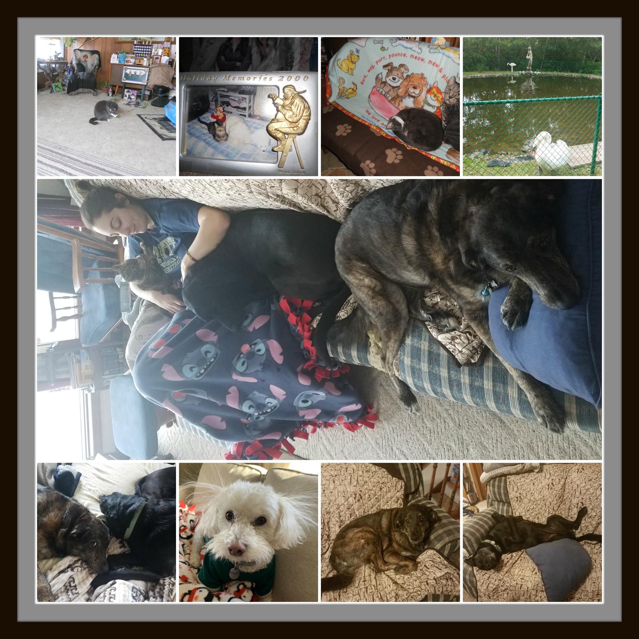 Pet Collage 1