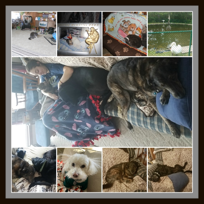 Pet Collage 1