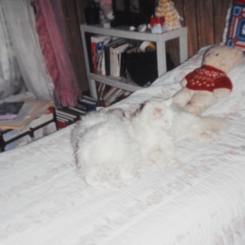 SNOWBALL ON MY BED WITH SNOOWPUFF MY STUFFED CAT AND TEDDY BEAR.