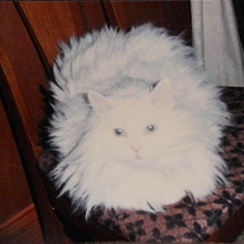 SNOWBALL WITH THE WHAT ARE YOUR DOING LOOK ON HER FACE?