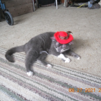 DAISY MAE IN HER RED HAT AFTER BECOMING A CROTCHETY COUGAR.